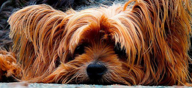 La prohibición de barbacoas y de mascotas en la comunidad de propietarios